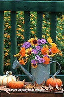 63821-113.16  Autumn Bouquet- Asters, Cosmos, Gaillardia, Goldenrod in watering can. Mini gourds, pumpkins & fence,  Marion Co.  IL