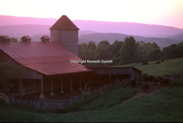 Virginia; Fauquier County; Hallowed Ground, Marshall, cattle, barns