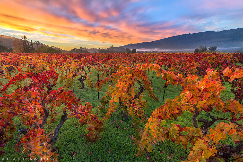 Zinfandel Sunrise