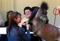 Miniature Horses Visit Nursing Home