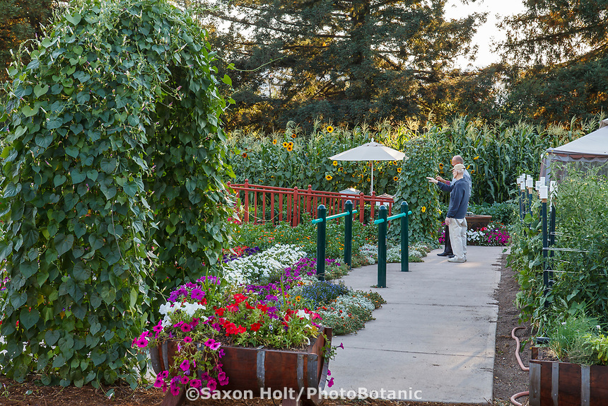 Community Garden of Healdsburg Senior Living Center, California