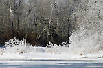 Hoar frost on the east fork of the Chippewa River (Sawyer Co., WI)
