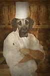 dog dressed as a baker, fantasy