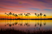 At sunset, a silhouetted row of palm trees reflect off the brackish pond at Waikoloa Beach, Big Island.