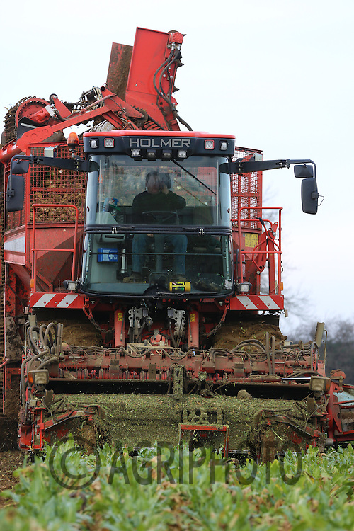Contractor Richard Ivatt lifting sugar beet with a Holmer self propelled sugar beet harvester..Picture Tim Scrivener date taken 12th January  2013.mobile 07850 303986 e-mail tim@agriphoto.com.....covering agriculture in the Uk....