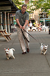 Man walking his two yorkie terrier dogs