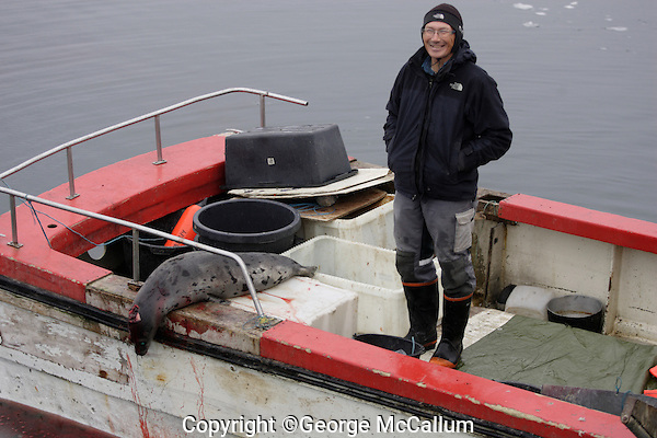 Small Inuit Seal hunter`s boat with Harp seal ( Pagophilus groenlandicus ) on back deck. Icefjord world heritage site  from  Jakobshavn Glacier, Ilulissat, Disco Bay, Greenland. NO MR