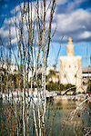 Torre del Oro Golden Tower), Seville, Spain. Selective focus on the foreground bare branches.