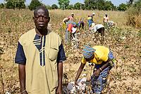 BURKINA FASO , Koumbia, women harvest conventional cotton by hand at farm of BOGNINI BOYOUN , the cotton is sold to SOFITEX company / Frauen ernten Baumwolle per Hand auf der Farm von BOGNINI BOYOUN, die Baumwolle wird an die SOFITEX verkauft
