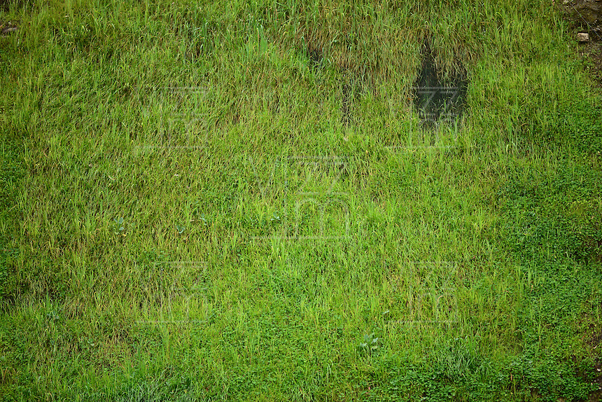 BOGOTÁ-COLOMBIA-14-01-2013. Textura en pasto verde, gramilla./ Green grass texture. Photo: VizzorImage/STR