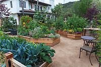 Raised bed vegetable garden in Los Angeles, California