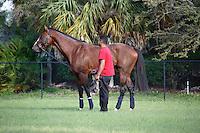 Union Rags enjoying a day off at Palm Meadows.Boynton Beach Florida. 03-01-2012