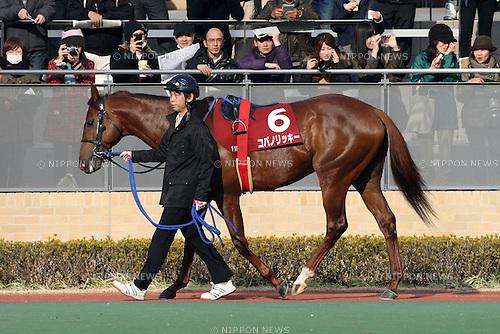 Copano Rickey,<br /> JANUARY 25, 2015 - Horse Racing :<br /> Copano Rickey is led through the paddock before the Tokai TV Hai Tokai Stakes at Chukyo Racecourse in Aichi, Japan. (Photo by Eiichi Yamane/AFLO)