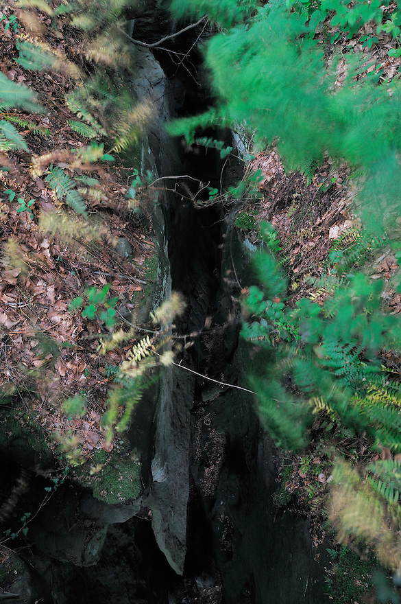 (Dryopteris filix-mas) Common Male Fern and crack in the ground near Goldfralay, Mullerthal trail, Mullerthal, Luxembourg