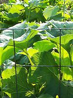 Joan Gussow's garden, August