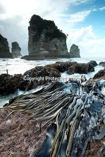 Motukiekie Beach, West Coast, New Zealand