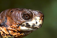 1R07-044z  Eastern Box Turtle - close-up of head - Terrapene carolina
