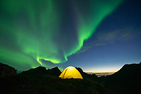 Northern Lights - Aurora Borealis fill sky over yellow tent, Moskenesøy, Lofoten Islands, Norway