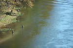 Three Fly Fishermen on the bank of Lake Taneycomo and another flowage downstream from the Table Rock Dam Missouri