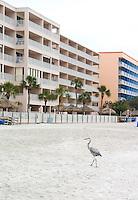 Condominiums overlooking egret on Gulf of Mexico white sand beach.  North Redington Beach Tampa Bay Area Florida USA