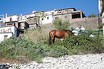 Horses in the village of Bubion, High Alpujarras, Sierra Nevada, Granada province, Spain