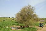Israel, Lower Galilee, Ein Ulam in Yavniel Heights