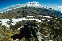 Stump and Mt. St. Helens (Fisheye), Mt. St. Helens National Volcanic Monument, Washington, US