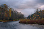 Idaho, North, Shoshone County, Coeur d'Alene  National Forest. The last of the autumn color along the North Fork of the Coeur d'Alene River on a foggy morning.