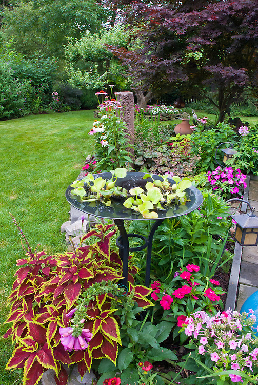 Colorful Backyard Garden With Birdbath Water Annuals And Mixed Perennials Lawn Grass