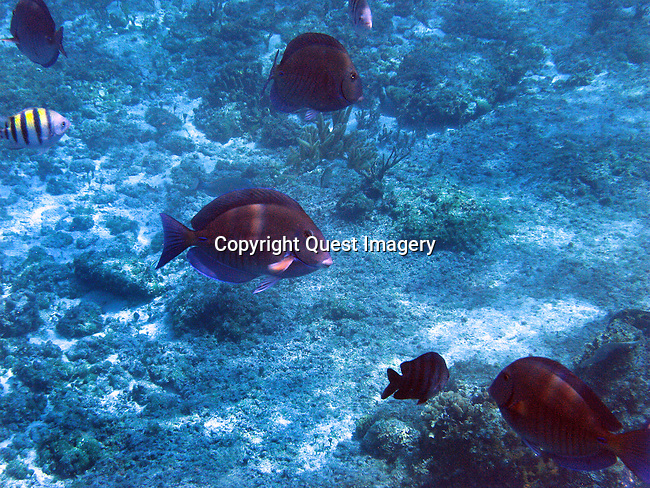 A snorkeling trip at the world famous Paradise Reef as well as Dzul Ha reef off the coast of Cozumel, Mexico. Cozumel is a world-class destination for SCUBA diving and snorkeling because of its crystal clear water, the multitudes of easily accessible coral reefs and the abundance of marine life.  <br /> Photo by Mike Rynearson/Quest Imagery