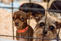 MANHATTAN ,NEW YORK, USA -JUNE 02:   Dogs waiting for adoption at  Best Friends Pet Super Adoption that held its annual adoption event bringing together more than twenty pet rescue organizations  and hundreds of dogs and cats into contact with people seeking to open their hearts & homes to an animal in need on June 2, 2017 in New York. Joana Toro/VIEW press