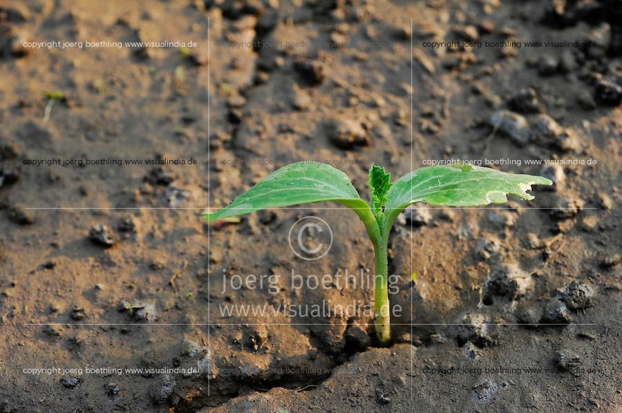 Bangladesh, Region Madhupur, Gemuesegarten der Garo / BANGLADESH Madhupur, Garo, vegetables in garden