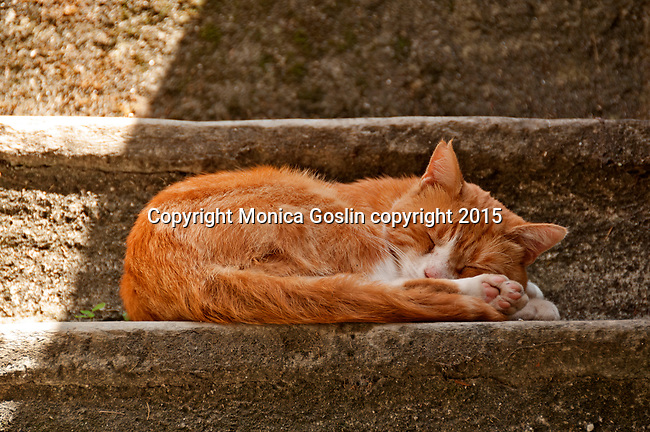 Cat sleeps in the shade on steps in the Lake Como town of Varenna, Italy