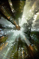 A long exposure captures the late afternoon sun in the redwood canopy above Fall Creek, in the Santa Cruz Mountains near Felton, CA.