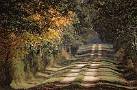 Europe/France/Centre/41/Loir-et-Cher/Chambord: Domaine National de Chambord - La forêt