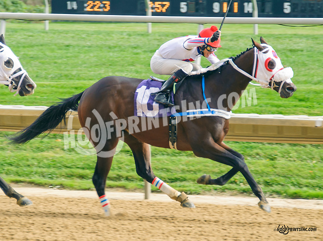Big Zapple winning at Delaware Park on 10/17/15