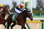 02-16-19 Diamond Stakes Tokyo Japan