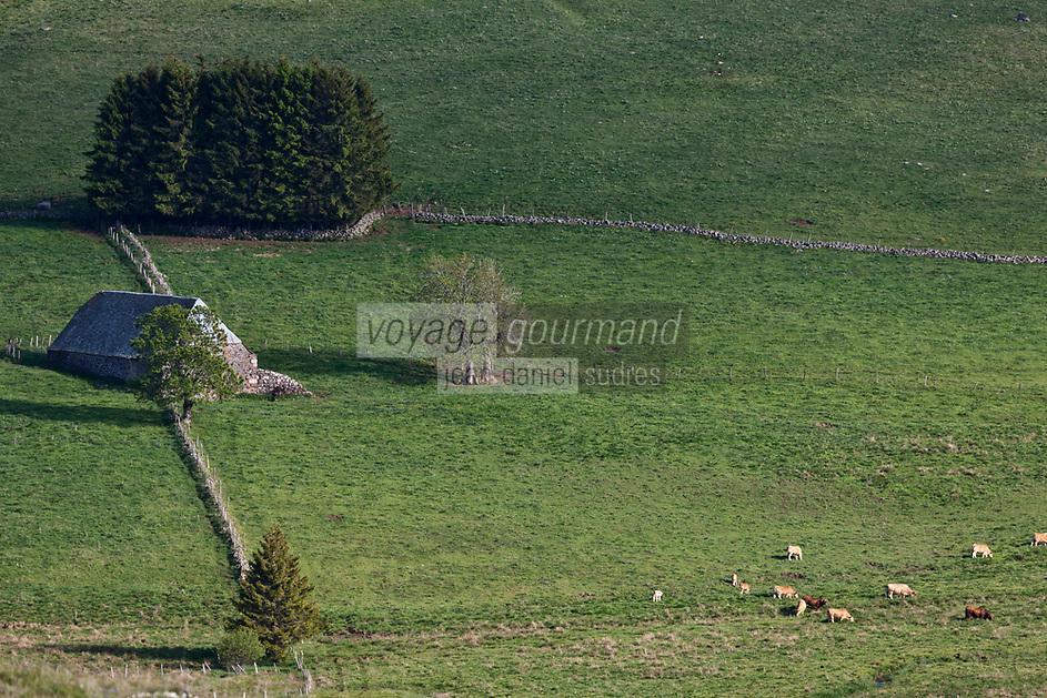 Europe/France/Auvergne/15/Cantal/Aubrac/Saint-Urcize: env de Laguiole: Buron  de Carteyret et paturages sur le Plateau de l'Aubrac