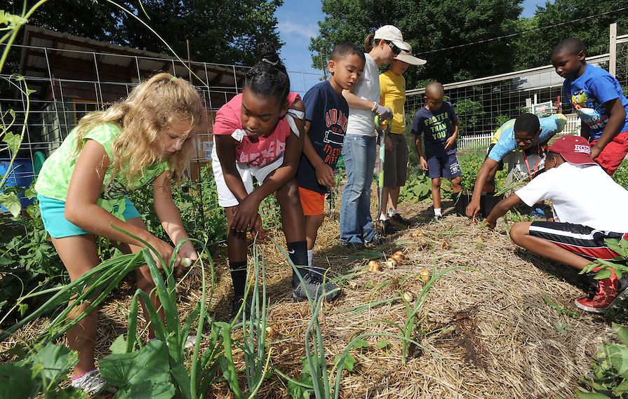 NWA Media/ANDY SHUPE - Terra Duncan, 8, left, and Adaischa Litt, 11, both of Fayetteville harvest onions in the Kid Crops garden near the Yvonne Richardson Center in Fayetteville. The Kid Crops program is possible through what is now a 5-year partnership between the center and the city of Fayetteville horticulturists and affords kids at the center to learn how to grow garden plants and how to use the food they grow form healthy eating habits.