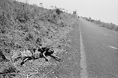 Goma, Zaire<br /> July 1994<br /> <br /> A Rwandan Hutu woman and her child lay along the roadside dying of chorea.<br /> <br /> Following the 1994 Rwandan Genocide, in which Hutu militia groups and the Hutu lead Rwanda military, killed an estimated 800,000 ethnic Tutsis and sympathizers during a 100-day killing spree, 2 million ethnic Hutu?s, fearing reprisals, flee the country. The vast majority went to Goma, Zaire as tens of thousands died in epidemics of cholera and dysentery that swept the roadside crowds and refugee camps. People who had actively participated in the genocide hid among the refugees, fueling the First and Second Congo Wars.<br /> <br /> The international community, and the United Nations in particular, drew severe criticism for its inaction in the wake of the Rwandan Genocide.