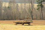 Amish wagon loaded with stones picked from field in Nippenose Valley.