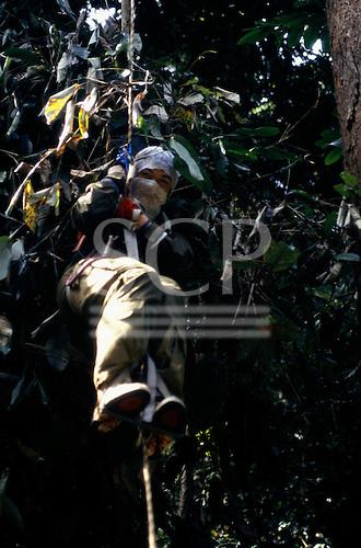 Makande, Gabon. Sue Cunningham climbing a huge Okume tree using a rope. (by Gilles Ebersolt).