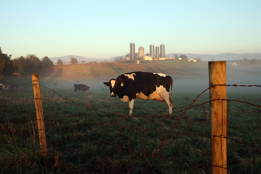 Fog sets on farmland in the early morning hours in Albemarle County. Photo/ Andrew Shurtleff