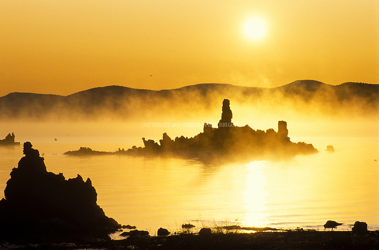 "Sunrise in winter at Mono Lake, a large, shallow terminal (no outlet) saline lake formed at least 760,000 years ago. Diversion of water inflows by Los Angeles beginning in 1920's lowered lake levels 30% by 1982, exposing previously submerged tufa formations and threatening vital migratory bird resting area and food sources. Nearly 2,000,000 waterbirds, including 35 species of shorebirds, use Mono Lake to rest and eat for at least part of the year including second largest nesting population of California gulls. Name  ""Mono"" from ""Monachi"", a Yokut term for the tribes that lived on both the east and west side of the Sierra Nevada. Mono County, CA."