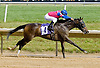 Malibu Yankee winning at Delaware Park on 6/13/12
