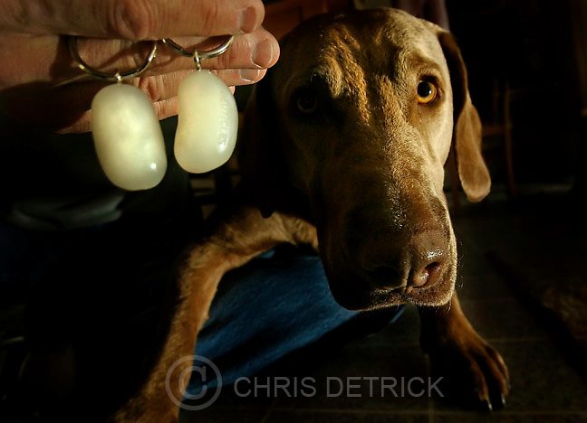 Millcreek, Ut --12/9/2005-- Dr. Tom Knecht displays a pair of &quot;neuticles,&quot; prosthetic dog testicles that he had implanted into his Chesapeake Bay Retriever, Roger. Neuticles available in three models: NeuticleOriginals (rigid firmness) NeuticleNatural (natural firmness) and Neuticles UltraPLUS. Each are crafted from FDA medically-approved materials- replicating the animals testicle in size, shape, weight and feel. They cost anywhere from $73-$330. &quot;Roger now walks taller and struts his stuff for the bitches. He is a stud with a manly scrotum,&quot; said Knecht.<br />