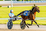 06-27-19 New York Sire Stakes Yonkers