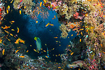Colorful Reef- cutout with rainbow reef