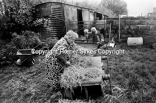 Puppy Farming Wales 1989.  Two Old English Sheepdogs and their breeder.