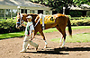 Winning Image before The Sweet and Sassy Stakes at Delaware Park on 6/23/12